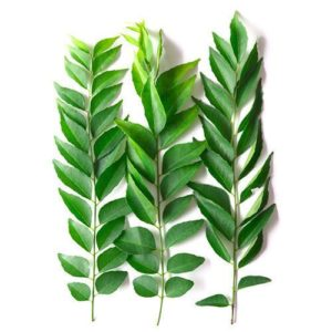 Curry leaves orkadi patta are popular in India because of its aroma and striking taste. These leaves can be added to numerous dishes.
